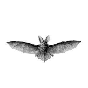 vleermuis-verjagen