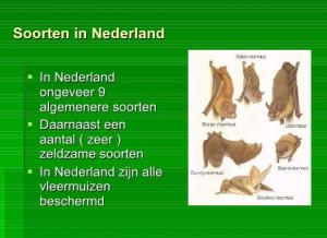 Soorten vleermuizen nederland
