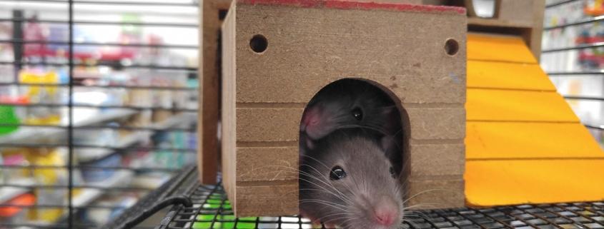 muizen verjagen theezakjes